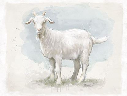 Picture of Painted Billy Goat